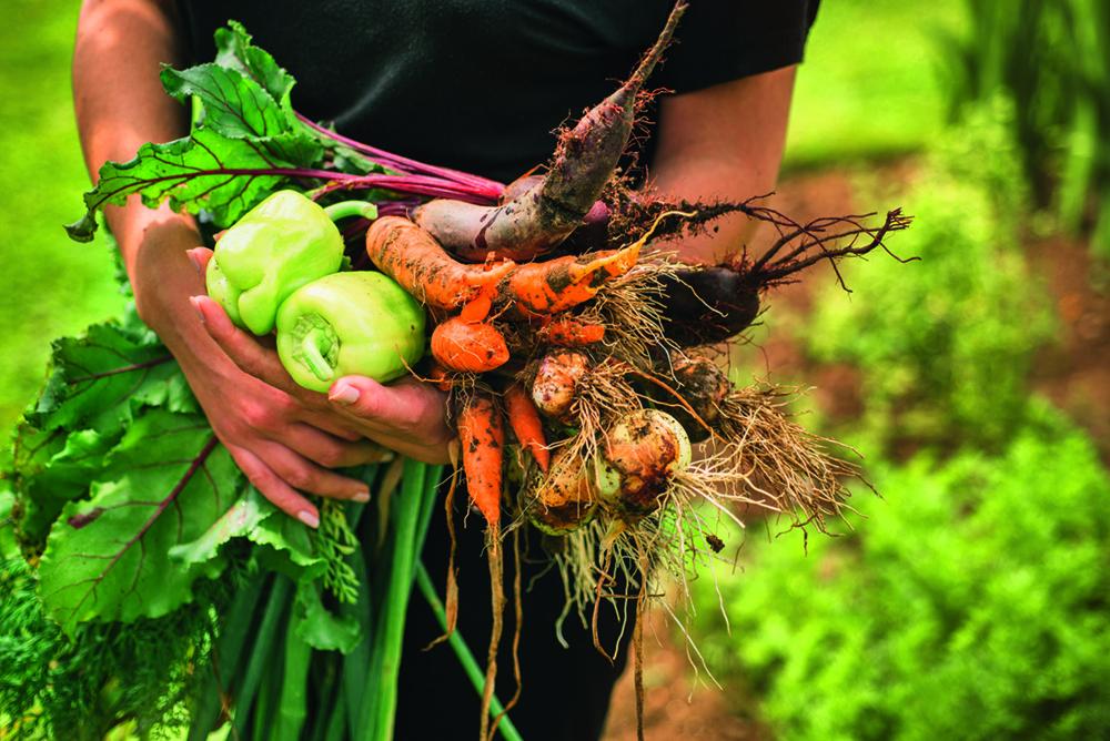 Globus zöldségek termesztése